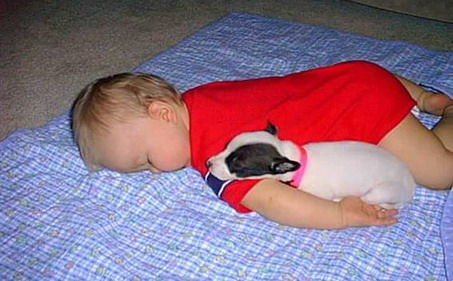 Boston Terrier pup and baby