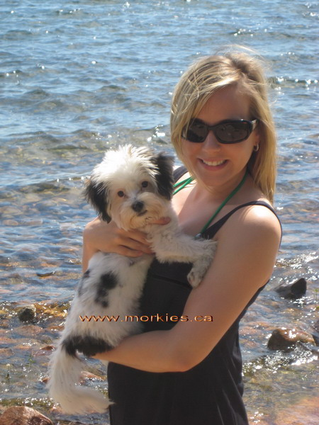 Rachelle with Halladay our bigger morkie puppy!