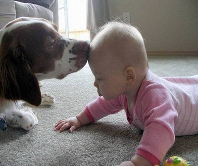 Spaniel and baby