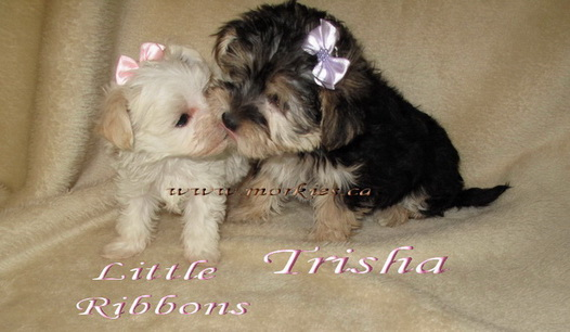 Affectionate kisses! Tiny Ribbons is for sale