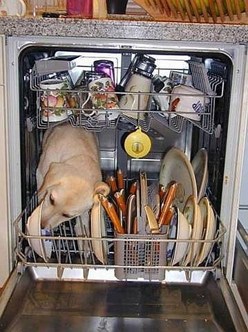 dogs and dishes